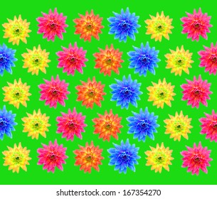 Big set of beautiful colorful flowers