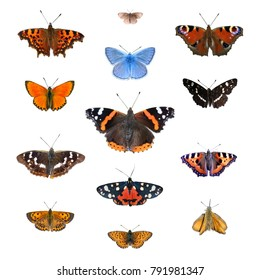 Big set of the European butterflies isolated on a white. Comma, Woodland ringlet, Peacock, Common blue, Scarce copper, Red admiral, Map, Purple amperor, Scarlet tiger, Small tortoiseshell, frittillarg