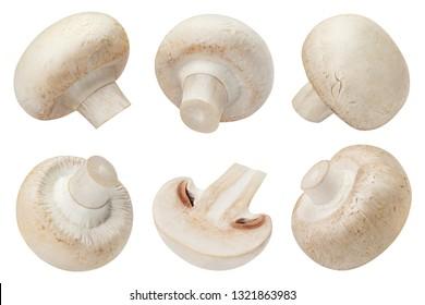 Big set of fresh champignon mushrooms, isolated on white background