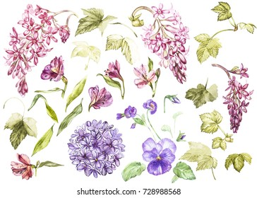 Big Set Watercolor collection with plants elements - leaf, flowers. Botanical illustration isolated on white background. Floral nature. Flowers of black currant, Alstroemeria, Lilac and Pansy.