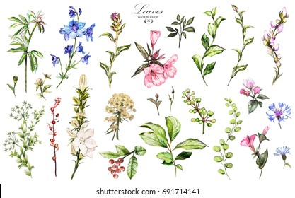 Big Set watercolor elements - wildflowers, herbs, leaf. Botanic, collection garden and wild, forest herb, flowers, branches.  illustration isolated on white background, exotic  leaf. Berry