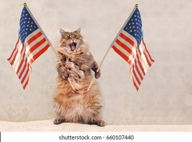The big shaggy cat is very funny standing.flag 3
