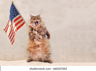 The big shaggy cat is very funny standing.flag 2