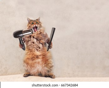 The big shaggy cat is very funny standing with grooming tools.