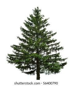 big single fir tree isolated on white background