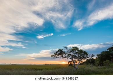 Big Sky and Small Tree on Tybee Island at Sunrise
