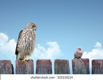 Big and small birds sitting on a fence. Strength and weakness concept.
