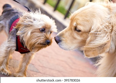 big and small dog friends on street ,yellow ,meeting ,wonderful  ,cute ,pet, looking,  beautiful, head , amazing, month, standing, two, lovely ,together, portrait  ,kissing