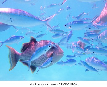 Big and small fish in the sea