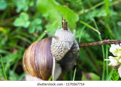 Big snail in the grass, macro photography, cochlea