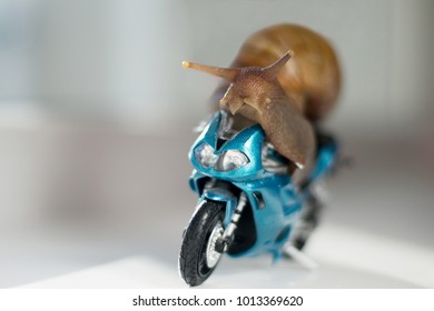 A big snail rides a racing motorcycle, concept of speed and success, selective focus