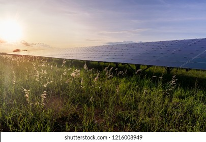 Big solar PV module and solar cell array in a solar plant on a beautiful field with flowers and grass being powered by the sun at sunset.