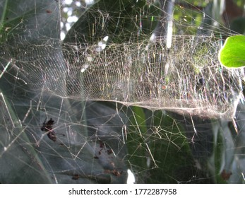 Big spider web in the sun light