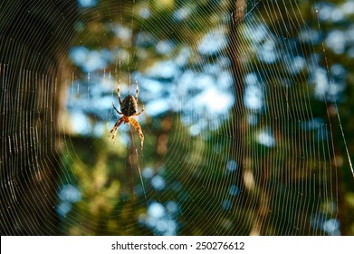 big spider in the woods waiting for the network to victim