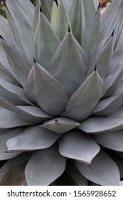 big spikey plant for backround