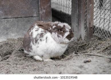 big spotted rabbit sits