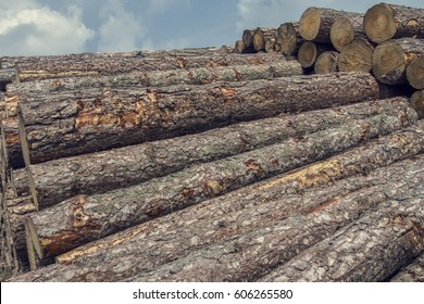 A big stack of wooden logs lying in the forest with the blue sky in the background