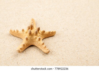 Big starfish on a sand, macro shot, top view, text space