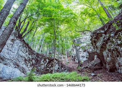 Big stones in deciduous forest, Big Fatra, Slovak republic. Seasonal natural scene. Travel destination.