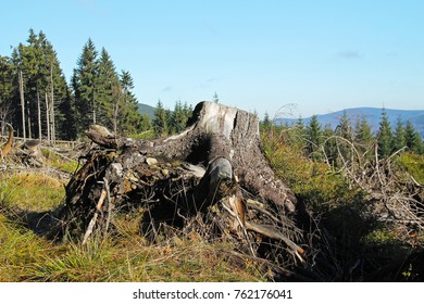 big stump in the nature