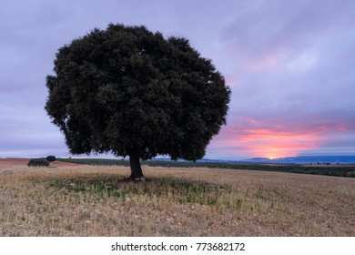 Big sunrise and tree in countryside