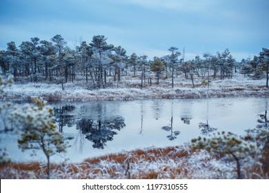Big swamp wetlands Kemeri national park, Latvia. Travel concept