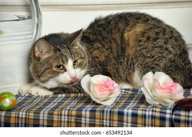 Big tabby cat and flowers
