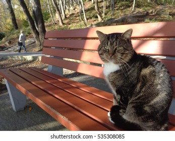 Big tabby cat sitting on sunny bench in city park