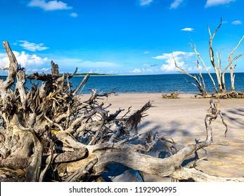 Big Talbot Island Driftwood