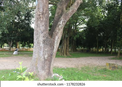 Big tree Background image.its Really Awesome Looking.