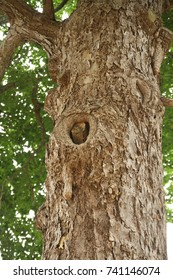 Big Tree Bark