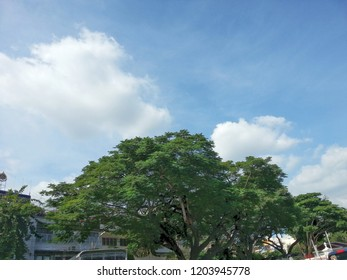 Big tree with blue sky.