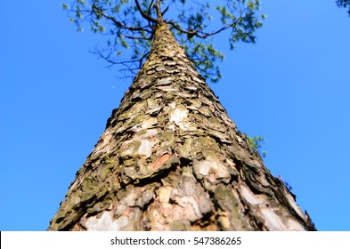 The big tree and bluesky background