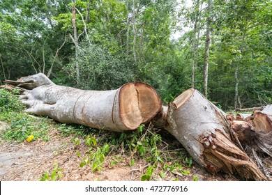 Illegal Logging Images, Stock Photos & Vectors | Shutterstock