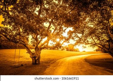 big tree in garden of golden sunlight