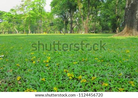 Big Tree Green Grass Little Yellow Stock Photo Edit Now 1124456720