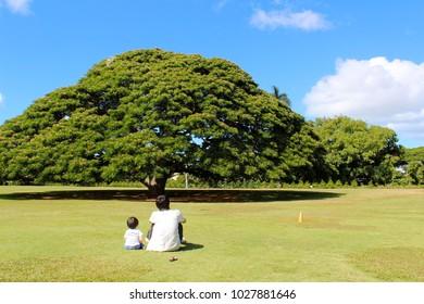 big tree in Hawaii