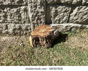 A big tree log laying on the grass near a stone wall.