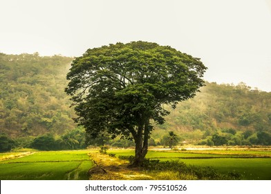 big tree with nature background