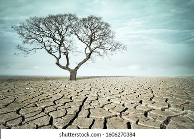 big tree on drought land, dry cracked ground and the tree without leaves, abstract climate background