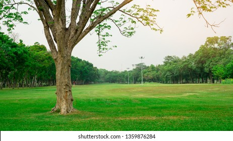Big tree on fresh green grass smooth large lawn yard, greenery trees on background, good maintenance lanscapes in a public park garden under cloudy sky