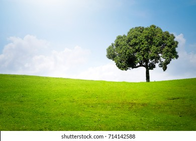 Big tree on green meadow landscape with blue sky with copy space