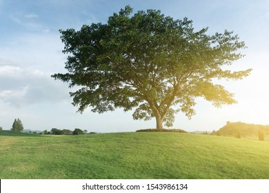 The big tree on the hill with sunrise