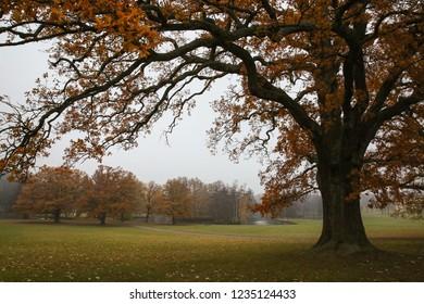 A big tree in the park at Drottningholm Palace, Stockholm Sweden.