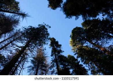 Big tree park natural. Arnold, California