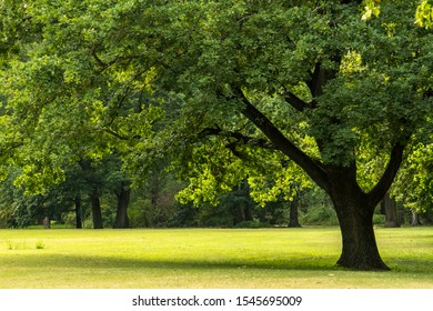 Big tree in Peaceful Garden