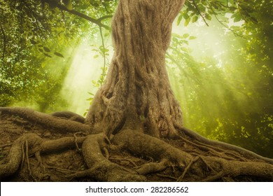 big tree roots and sunbeam in a green forest