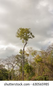 big tree with sky background
