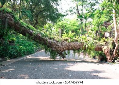 Big Tree trunk Block the path way.
