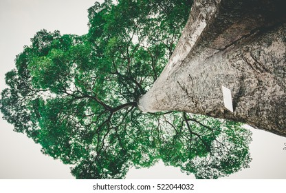 Big Tree trunk and green leaves